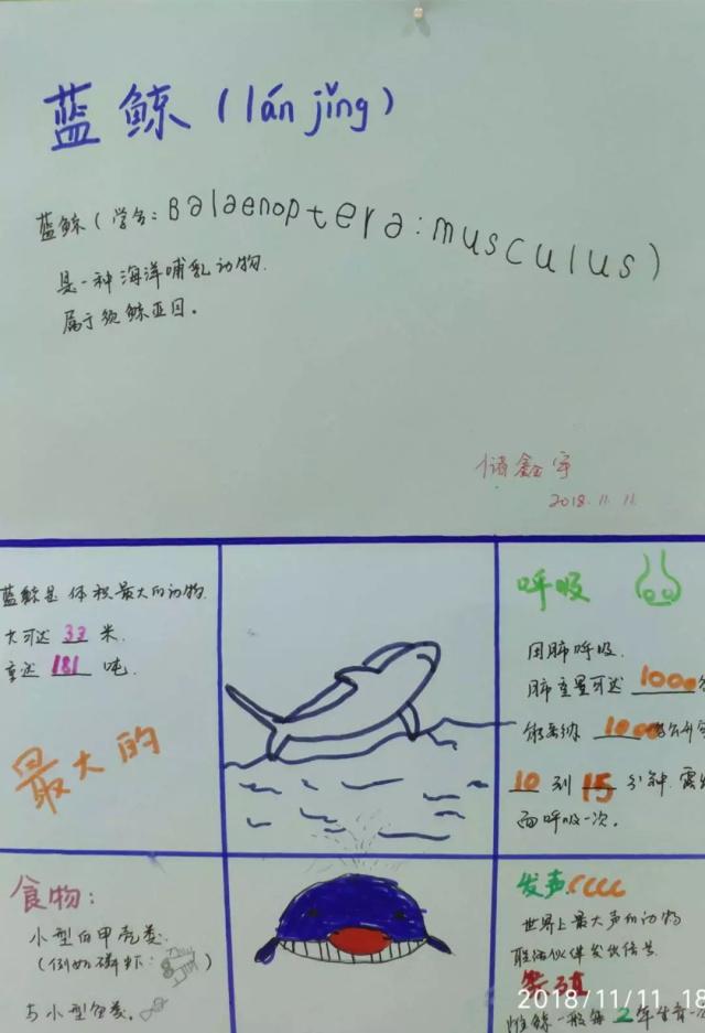 蓝鲸介绍.jpeg